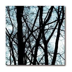 Obraz Old Trees 2
