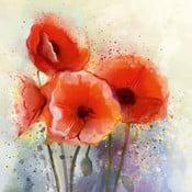 Obraz s motivem vlčích máků Flower, 45 x 45 cm