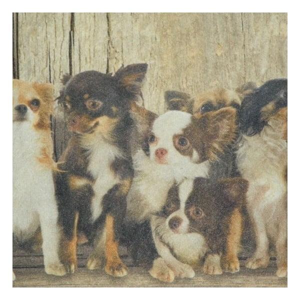 Předložka Chihuahua Family 75x50 cm