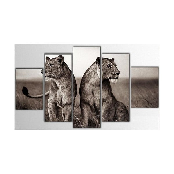5dílný obraz Lions, 85x55 cm