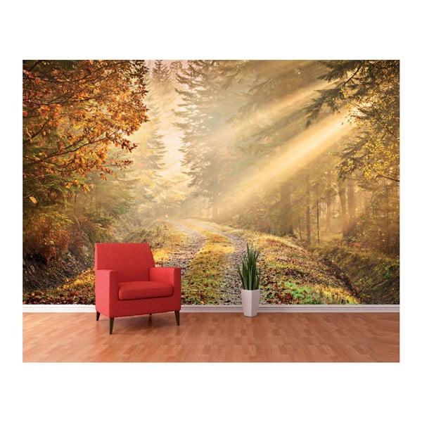 Velkoformátová tapeta Lesní stezka, 360x253 cm