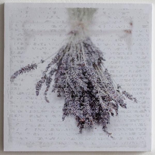 Obraz na plátně Lavende, 28x28 cm