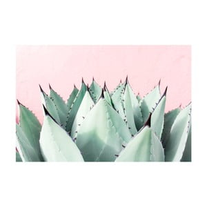Obraz Marmont Hill Sweet Succulent, 45x30cm