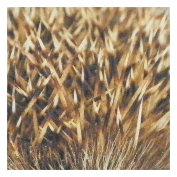 Předložka Hedgehog 75x50 cm