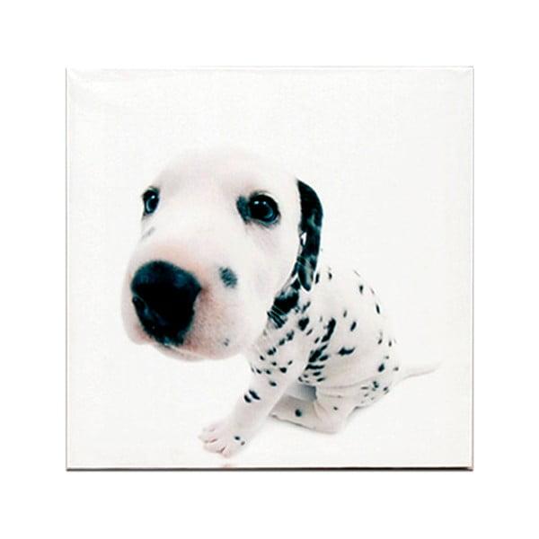 Dřevěná cedule White Puppie, 30x30 cm