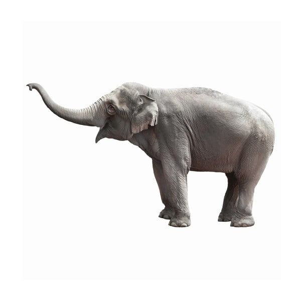 Samolepka Slon, 163 cm
