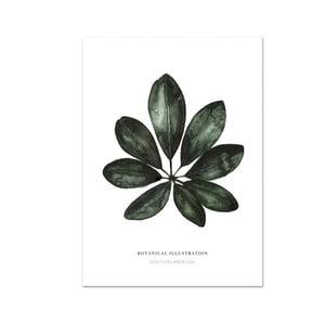 Plakát Leo La Douce Schefflera Arboricola, 29,7x42cm