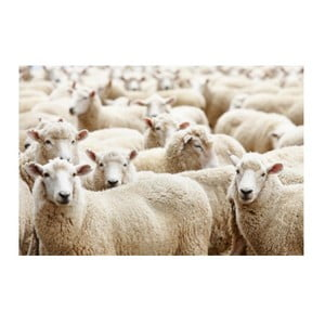 Předložka Sheep 75x50 cm
