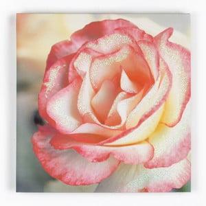 Tablou Graham & Brown Pink Petal, 50 x 50 cm