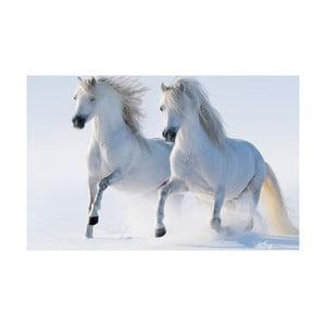 Obraz Na bílém koni, 45x70 cm
