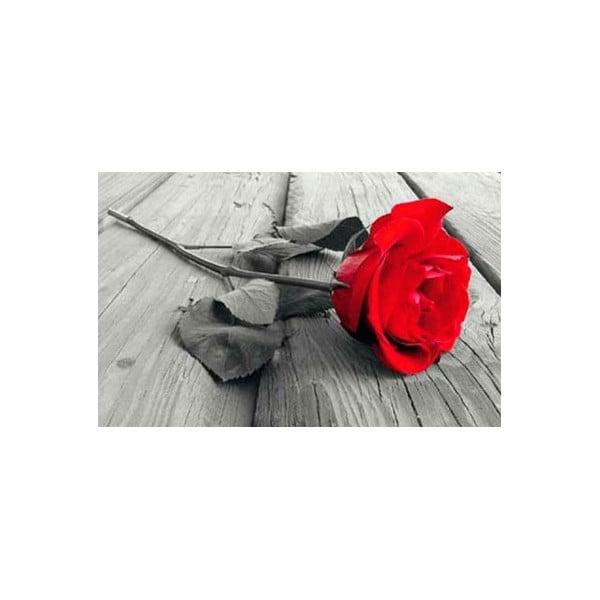 Rose, 81x51 cm