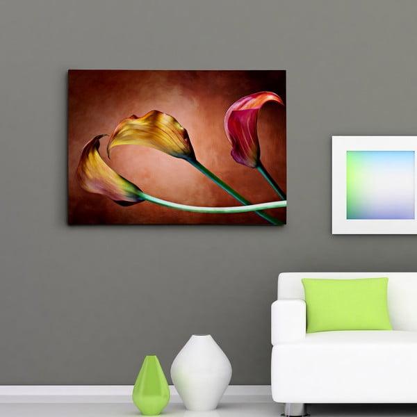 Obraz na plátně Kaly hrající barvami, 50x70 cm