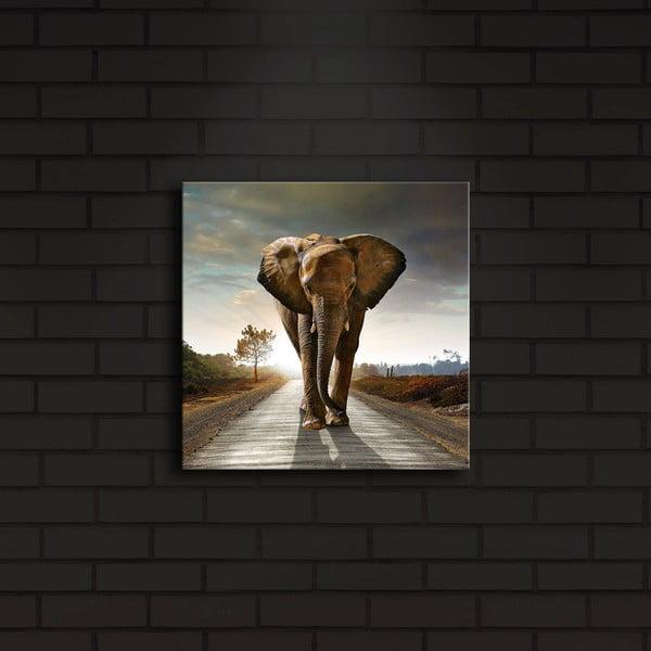 Podsvícený obraz Elephant, 28x28cm