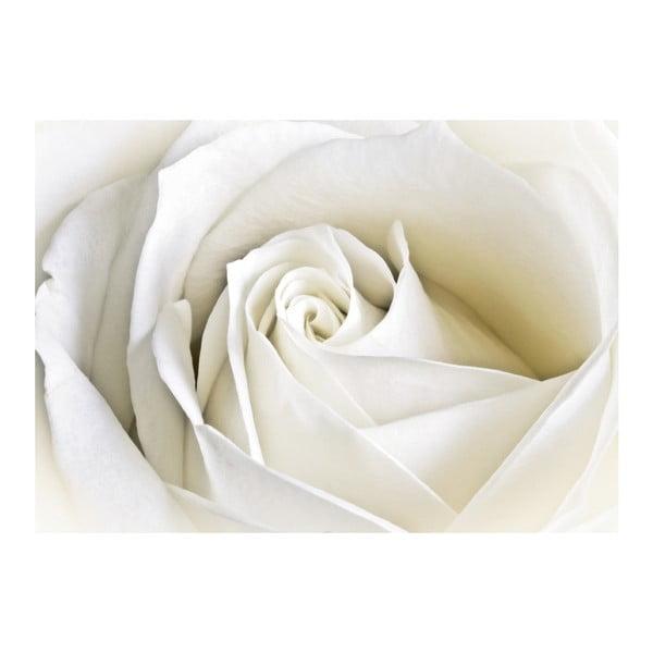 Tapeta Bílá růže, 400x280 cm