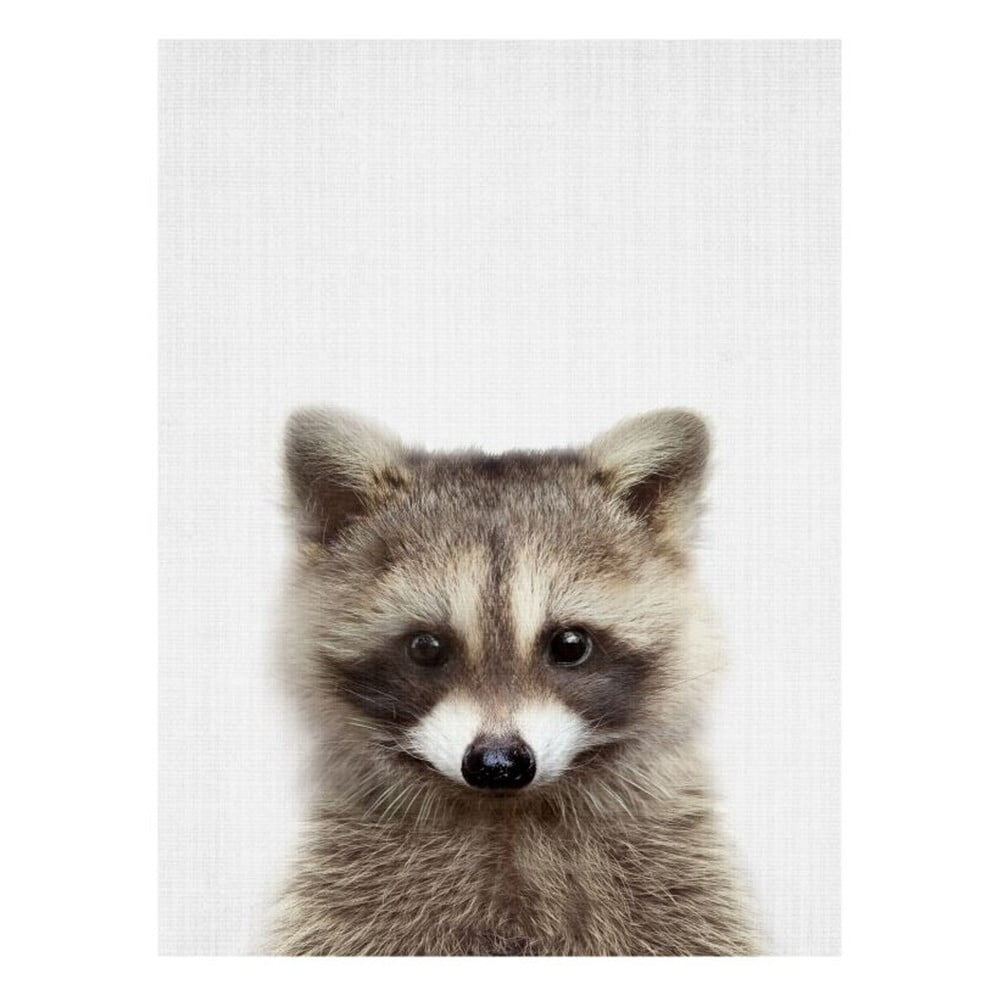 Plakát Blue-Shaker Baby Animals Raccoon, 30 x 40 cm
