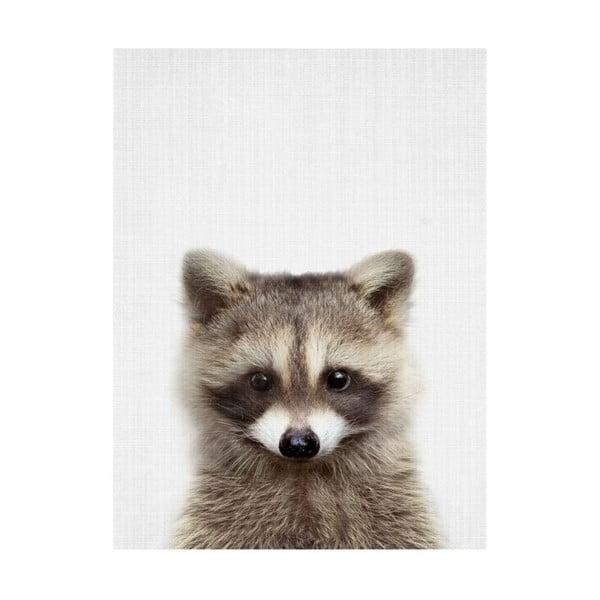 Baby Animals Racoon poszter, 30 x 40 cm - Blue-Shaker