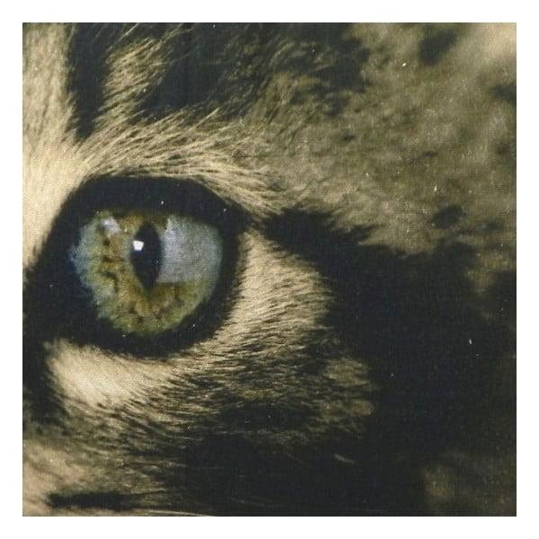 Polštář Kitten Green Eyes 50x35 cm