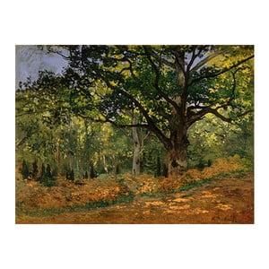 Tablou Claude Monet - The Bodmer Oak, Fontainebleau Forest, 70x50 cm