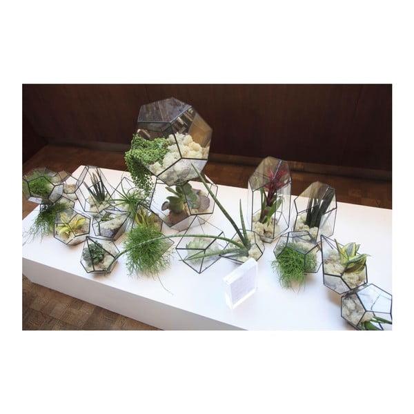 Závěsné terárium s rostlinami Urban Botanist Cloche