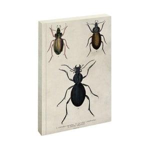 Agendă Jay Biologica Beetle