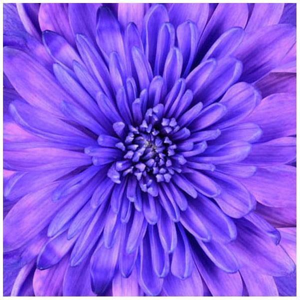 Obraz na skle Do modra, 50x50 cm