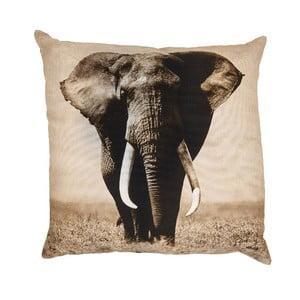 Polštář Elefante, 50x50 cm
