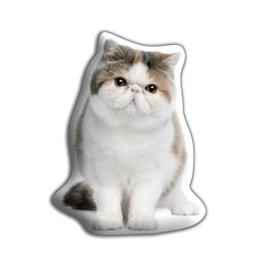 Pernă Adorable Cushions Exotic Shorthair