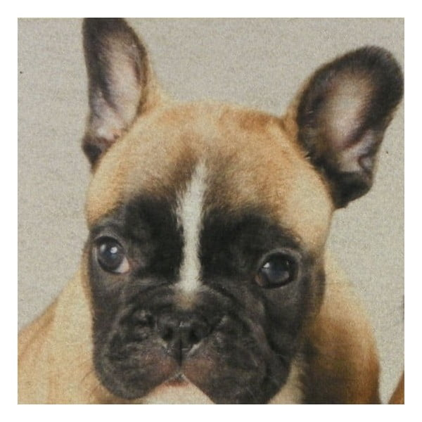 Předložka French Bulldog Puppies 75x50 cm