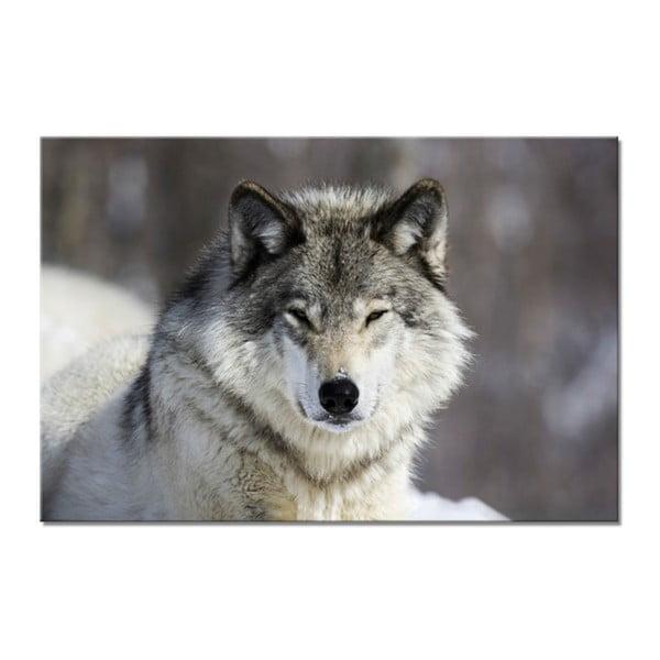 Glasspik Animal Wolf fali kép, 80 x 120 cm - Styler