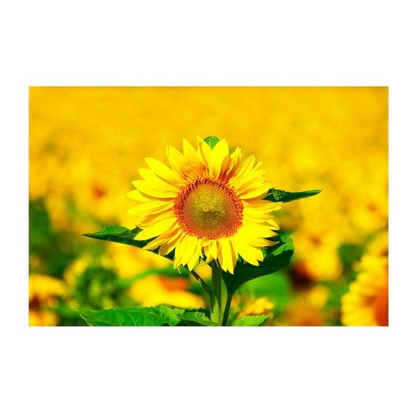 Obraz Slunečnice, 40x60 cm