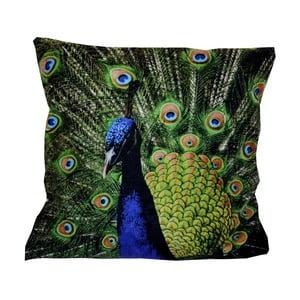 Polštář Animals Peacock, 42x42 cm