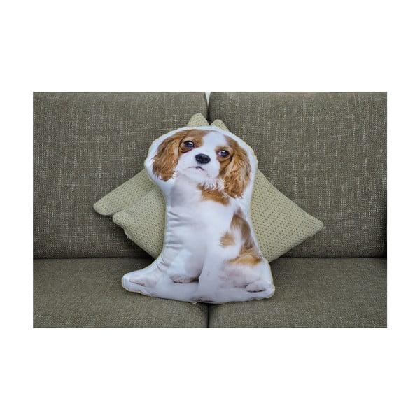 Polštářek Adorable Cushions Kavalírek
