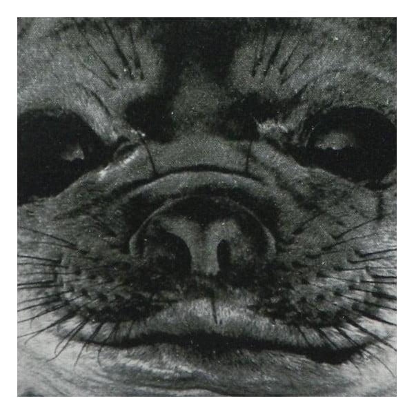 Polštář Sepia Seal 50x50 cm
