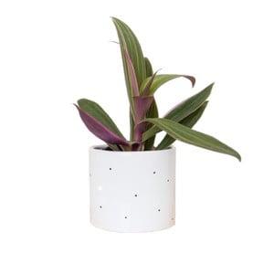 Květináč Dots, 11 cm