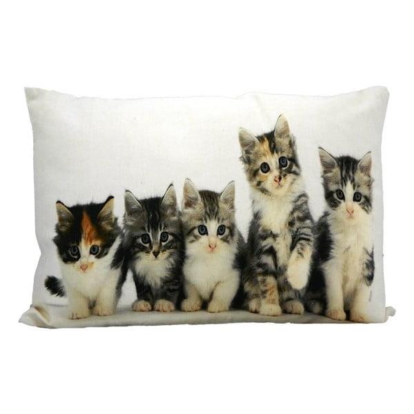 Polštář Kittens 50x35 cm