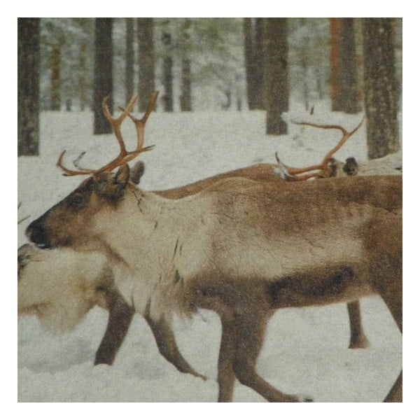Předložka Reindeer 75x50 cm
