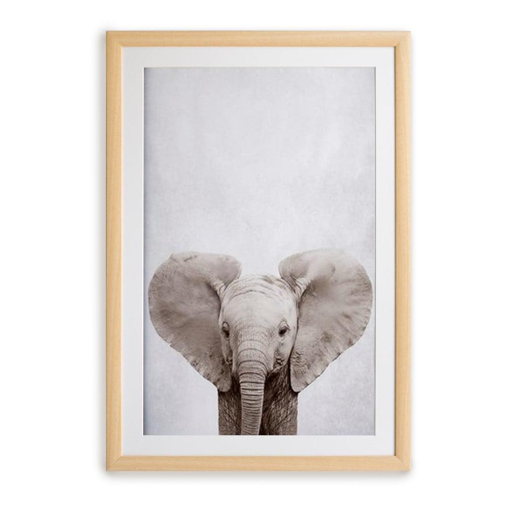 Nástěnný obraz v rámu Surdic Elephant, 30 x 40 cm
