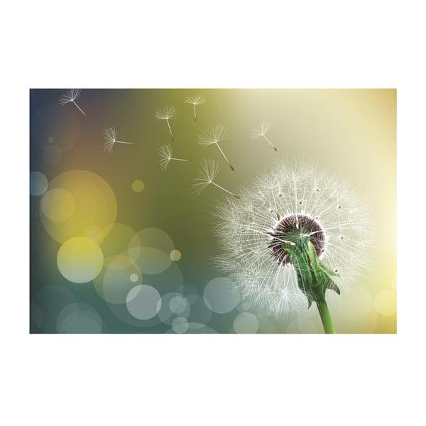 Obraz Dandelion, 60x80 cm
