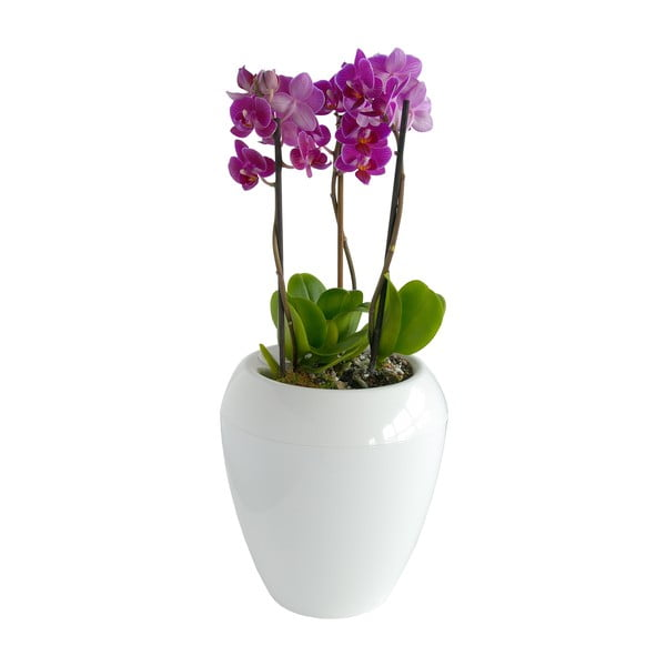 Samozavlažovací květináč Calimera (bílá) se stojánkem Triangolo
