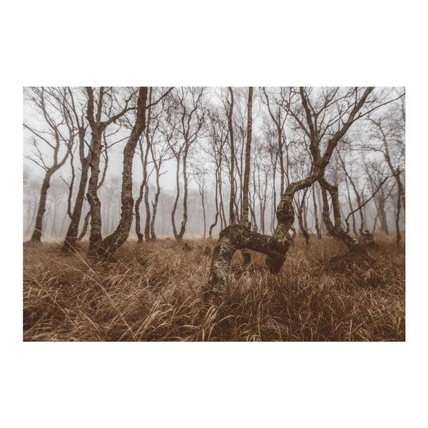 Fotografie Březový háj, limitovaná edice fotografa Petra Hricka, formát A1
