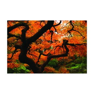 Fotoobraz Japonský javor, 90x60 cm