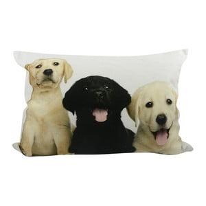 Pernă Mars&More Puppies Labrador, 50 x 35  cm