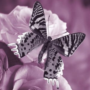 Obraz na skle Motýl I, 30x30 cm