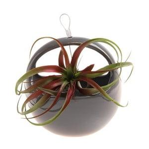 Závěsná váza Aerium